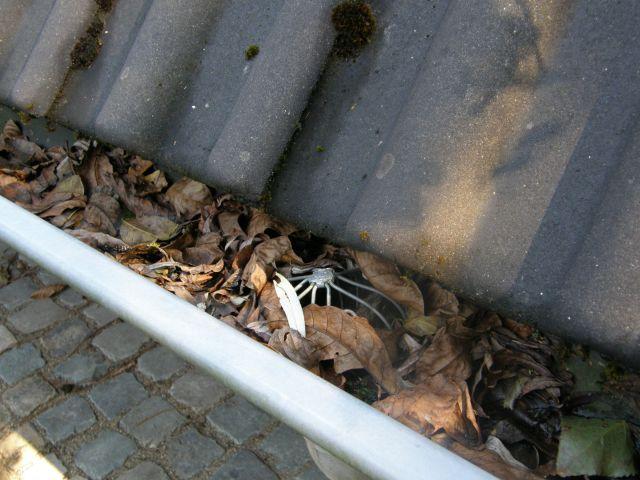wbb-dakkapellen - bladeren in dakgoot